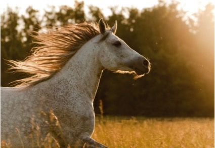 Being a Light-house for your Horse